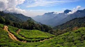 Munnar Honeymoon Place