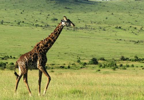 10 Nights Kenya Beach and Safari Honeymoon Package