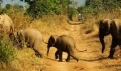 India Best Destinations For Couples Who Love Wildlife Adventures