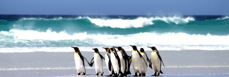 Falkland Islands Honeymoon Place