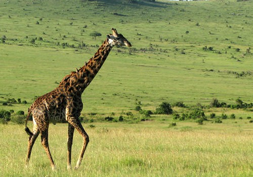 10 Nights Kenya Beach and Safari Honeymoon Package