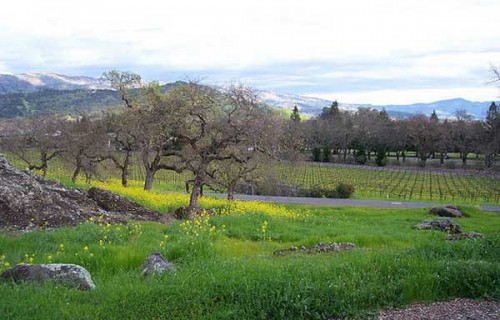 Romantic Places in Napa Valley