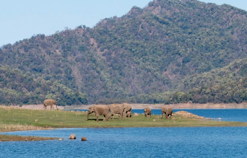 20 Most Famous National Parks in India