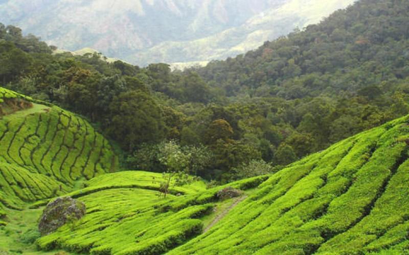 Munnar Tea Estates