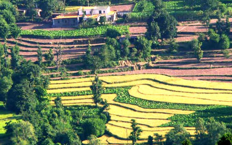 Terrace Farming, Kasauli
