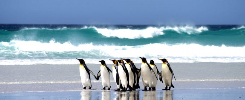 Volunteer Point beach in Falkland Island