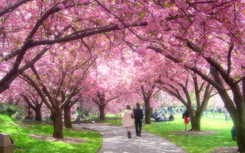 Botanical Garden, Brooklyn