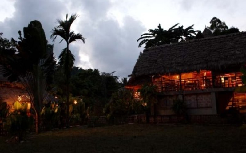 The Wild Orchid at Night
