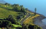 Tasmania-Wine