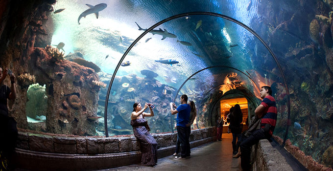 Mandalay Bay Shark Reef Aquarium