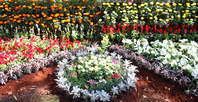 Empress Garden