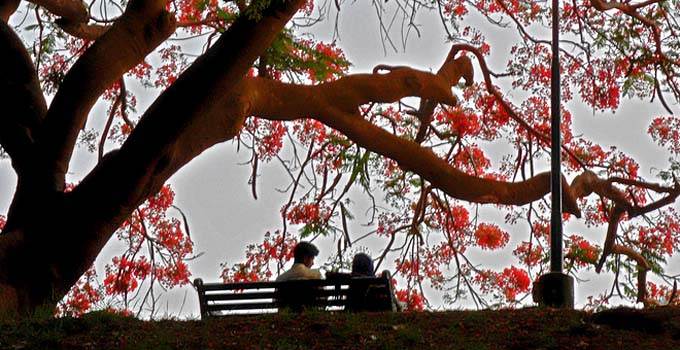 Lovers in Lalbagh Garden