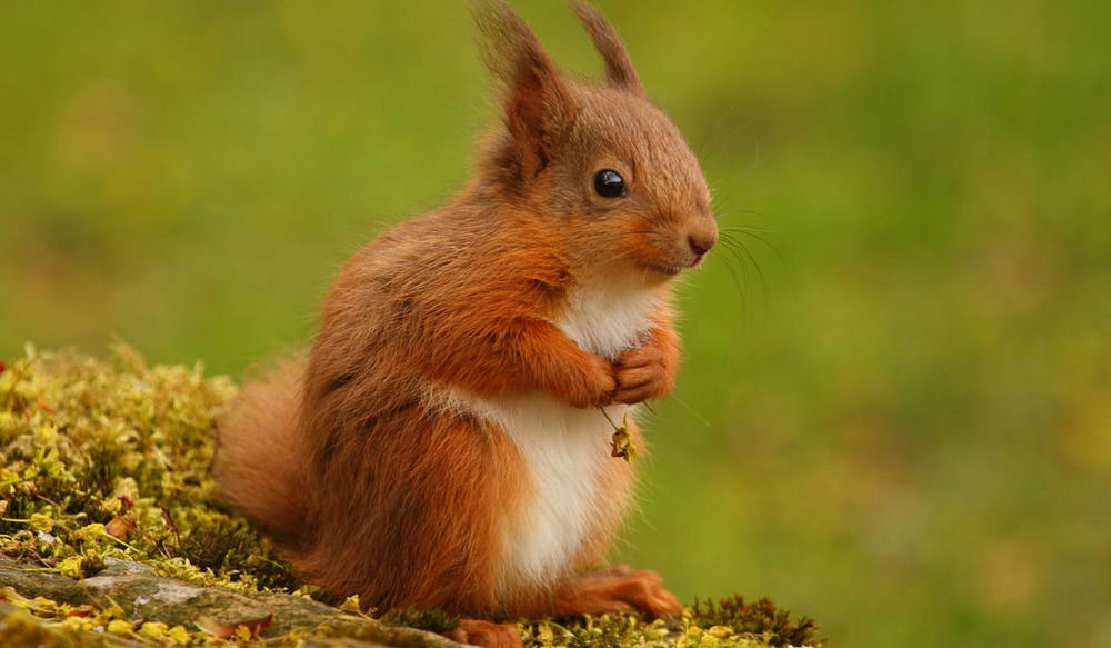 Photo of Some Cutest Animals That Will Force You To Say Aww So Cute !