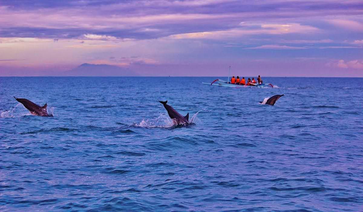 Dolphin Sightings at Lovina Beach